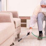 Empresas de control de plagas en Mallorca ofrecen desinfección profesional